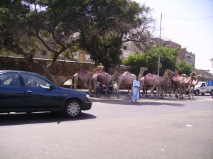 Seeing camels and donkeys on the streets of Cairo was not unusual